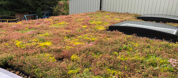 M-Tray® green roof